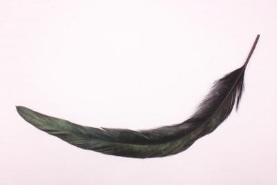 カラスの羽