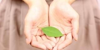 葉を持つ小さな手